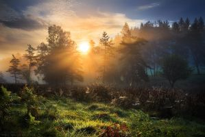 Swamp Realm by FlorentCourty
