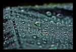The Dark Spring Rain by TeaPhotography
