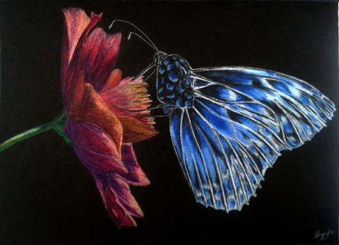 Butterfly moment by Jessito