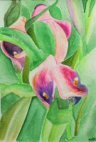 Watercolour Cala lilies by stephtastic14