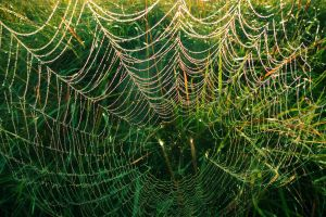 Iced Spider Web by jacko56
