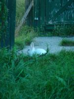 bunny by the fence by beth4328