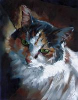 Calico in the Light by J-A-N-I-N-E
