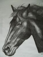 Black Horse by NewfieArtGirl