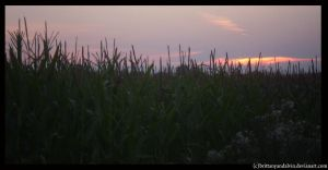 sunset over fields 2 by brittanyandalvin