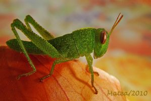 Vivid green grasshopper by Callmematea