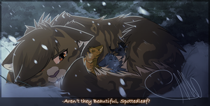 {WC}Aren't they beautiful, Spottedleaf? by 0-Bluejay-0
