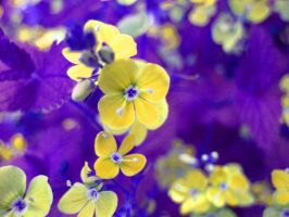again flowers in colours by CountessKern