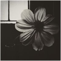 Flower at the window by Menoevil