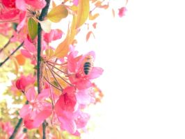summer bee by transparentcity