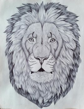 Lion by HDevers