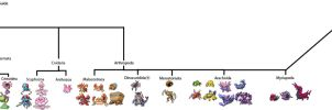 Pokemon Invertebrate Phylogeny by KFblade