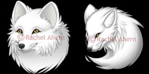 Arctic foxes by rcahern