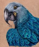 Glaucous Macaw by KristynJanelle