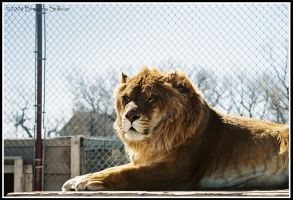 Liger Two by NurikoOfTheSun
