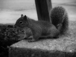 Squirrel by Phillysoul11