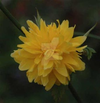 Yellow Flower by oliverporter3
