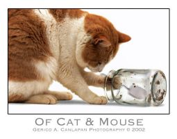 Of Cat and Mouse by jerishoots