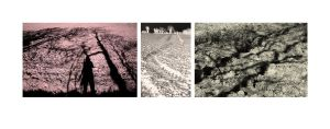 Field Triptych by lornamacdonald