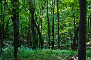 00-TalorsvilleLakeStatePark-June-2015-DSC06945-WP- by darkmoonphoto