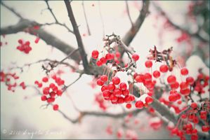 Winter Berries by alucier