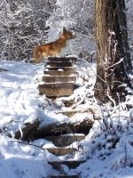 Welsh Corgi of Winter by Gwend-O-Ithilien