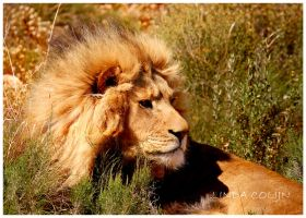 King of Africa by KonikPolski