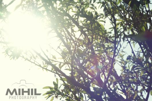 Tree Branches by Mihil