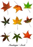 Autumn Leaves - Pack 1 by Inadesign-Stock