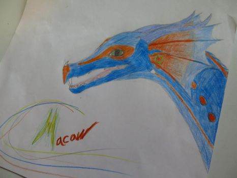 Macaw by Caninelion