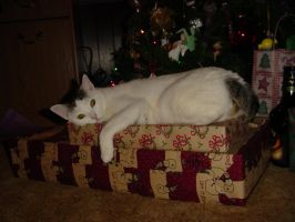 I love my present by cat-lovers