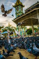 Birds of Mandalay by little-spacey
