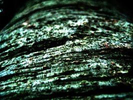 Bark of a Fig Tree by James-Fong