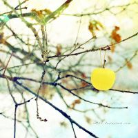 .: winter apple :. by all17