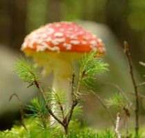 amanita in the background by indojo