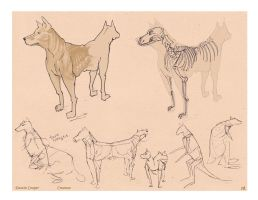 2 headed Dog creature - Comparative Anatomy by CatCouch