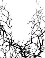 tree thorns by MidNightless