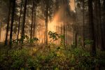 What you see in the woods II by tomsumartin