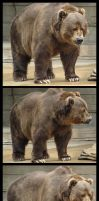 Brown Bear Package by SalsolaStock