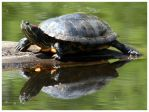 Turtle 2 by Lilithx13