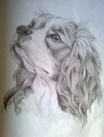 Cavalier King Charles Spaniel sketch by EternusNexxx