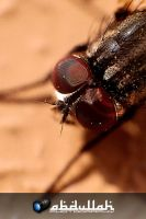Meet the housefly by Cj-Caty
