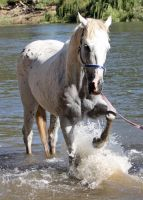 Horseys River 191 by aussiegal7
