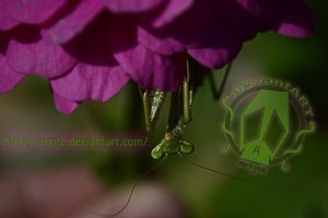 Hanging out on my Fav Flower by artjte
