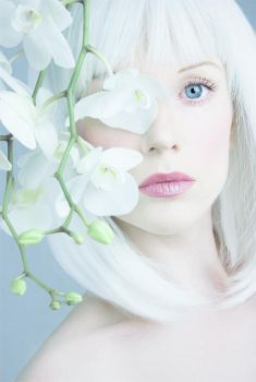 White Orchid by Muse1908