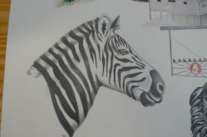 Zebra by MiMitchell