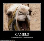 Gorgeous Camel Face by FaerieDragon19