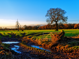 Country scene 2 - natural version by rhb4
