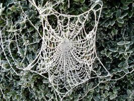 frozen web by Dieffi
