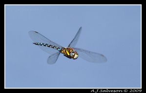 Inflight II by andy-j-s